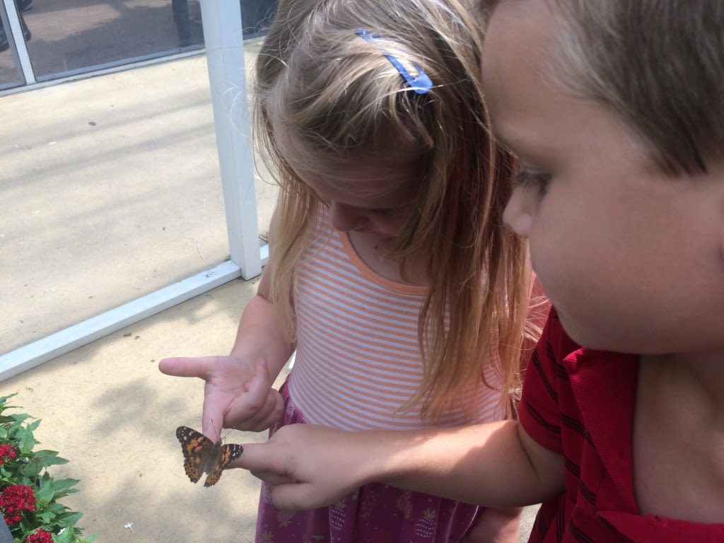 Kids will love trying to find all of the butterflies at Lukas Nursery and Butterfly Encounter in Oviedo, FL