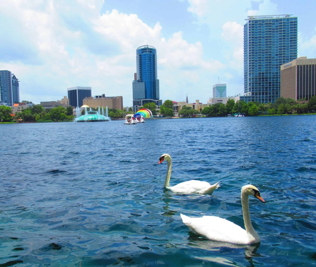 The Lake Eola Swans