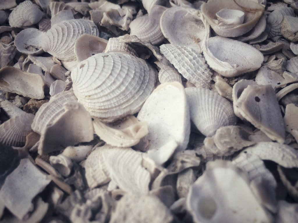Finding seashells at the beach is a fun, affordable family vacation activity