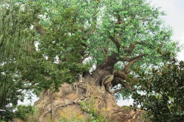 Tree of Life at Walt Disney World's Animal Kingdom