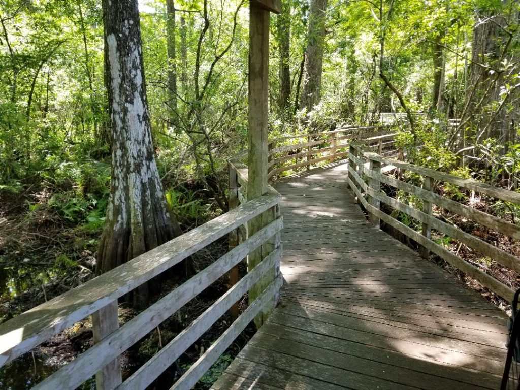 Planning a family vacation to Naples, Florida? From beaches to zoos, this post features 5 amazing things to do with kids in Naples, Florida